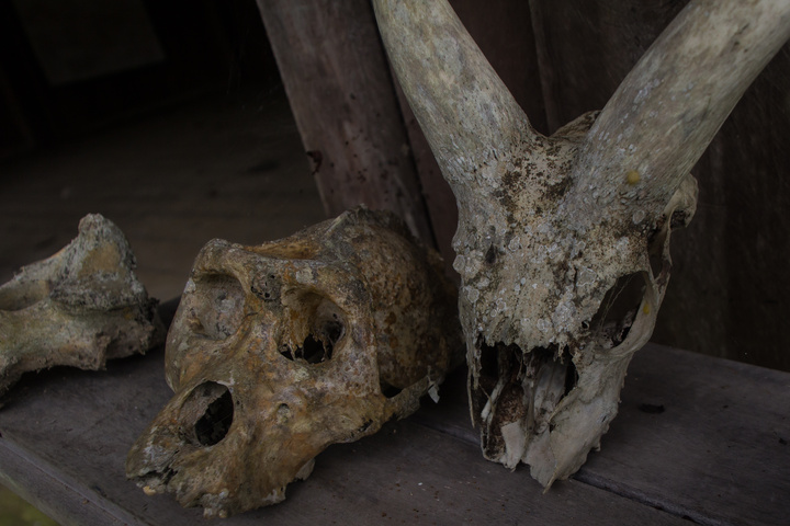 gorilla skull lope national park 720x480