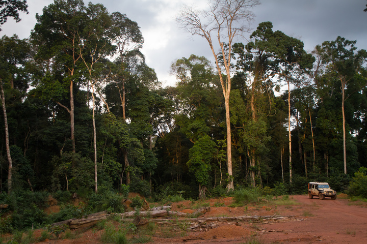 jeep africa gabon massive trees 720x480