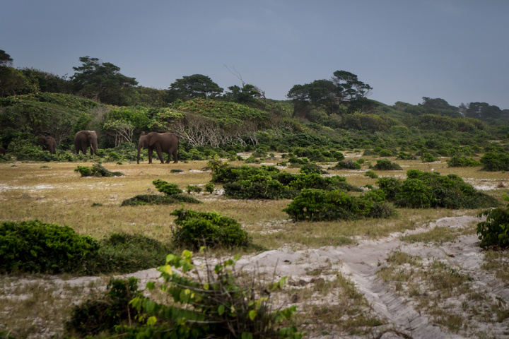 loango national park gabon elephants on beach 720x480