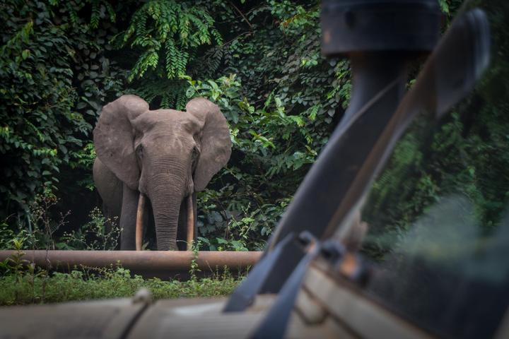 gabon jeep africa elephant aev snorkle 720x480