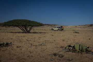 One of the few trees I found in the Namib