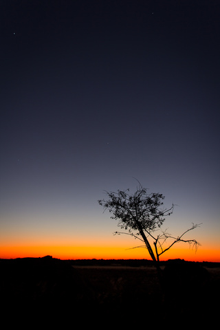 namib sunset 320x480