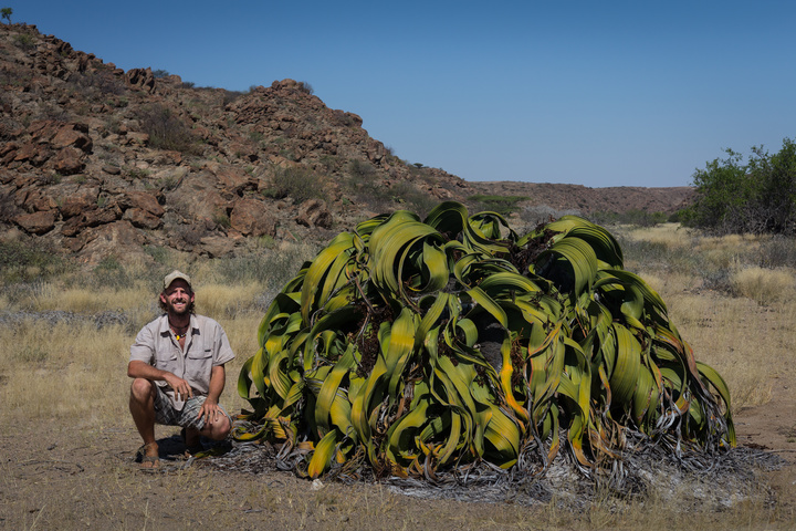 welwitschia oldest known dan 720x480