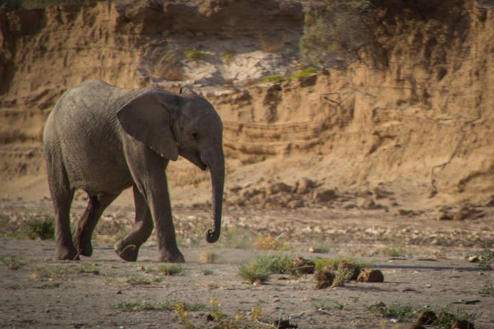 baby elephant 720x480