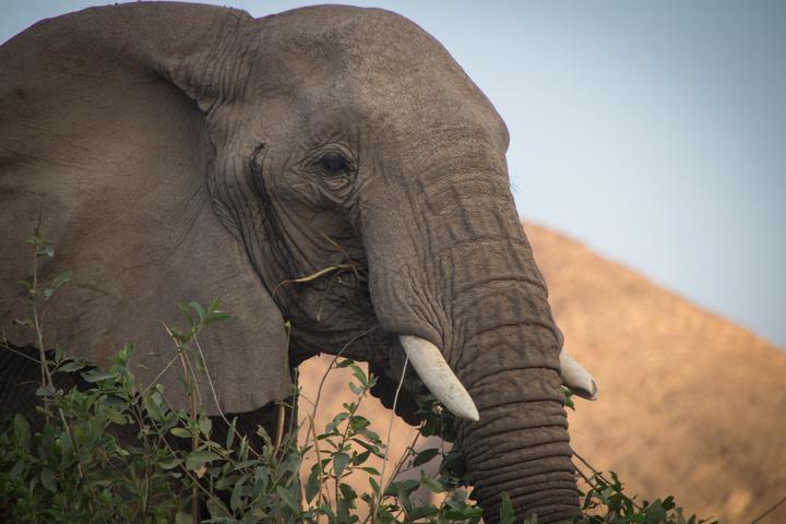big elephant close 720x480