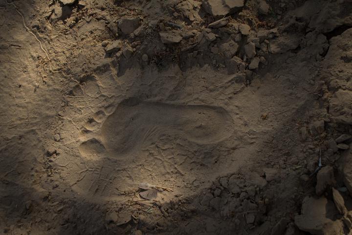elehant dan footprint 720x480