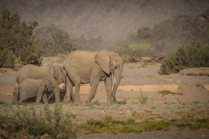 elephant family 720x480