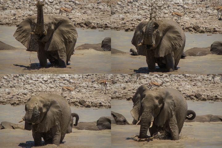 elephant joy 720x480