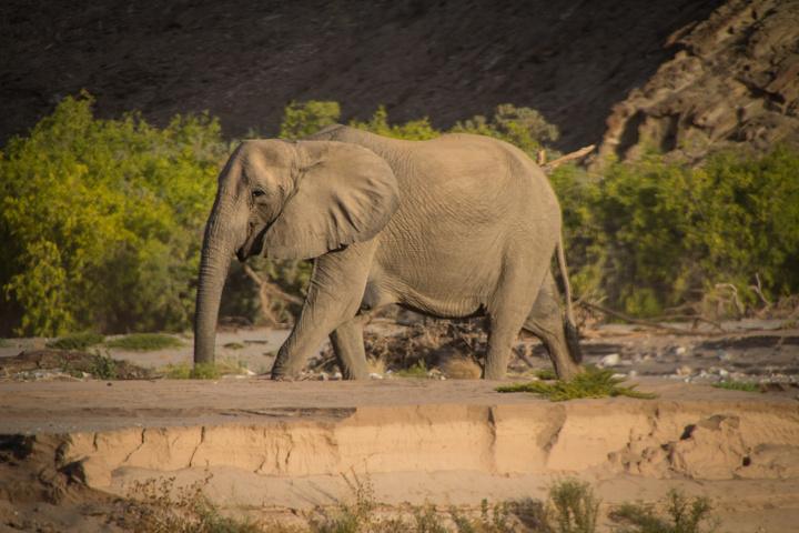elephant smile 720x480
