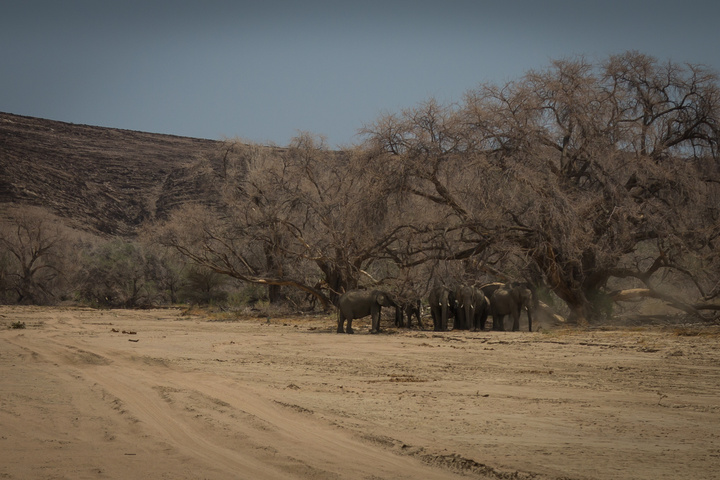 elephants dry riverbed 720x480