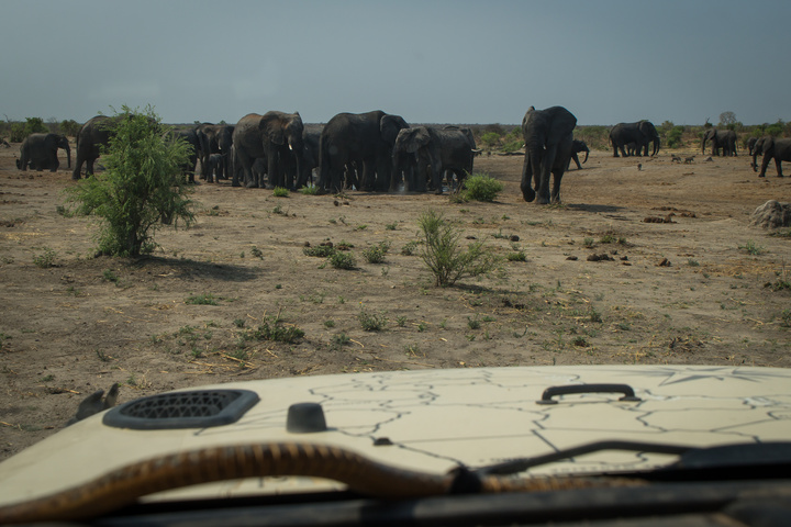 jeep hood elephants 720x480