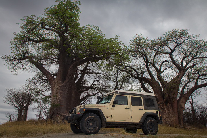 jeep profile baines baobabs 720x480