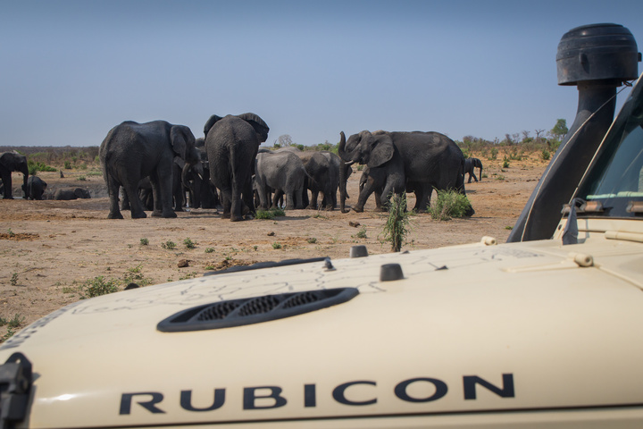 jeep rubicon elephants 720x480