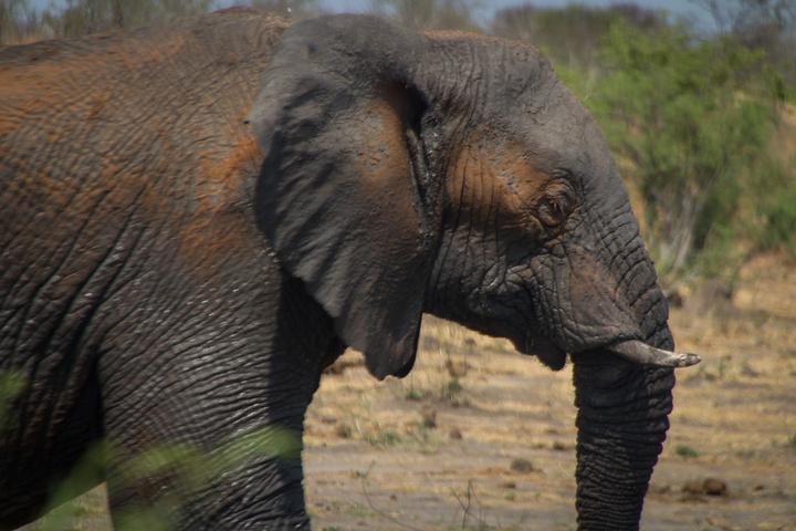 khaudum sandy elephant 720x480