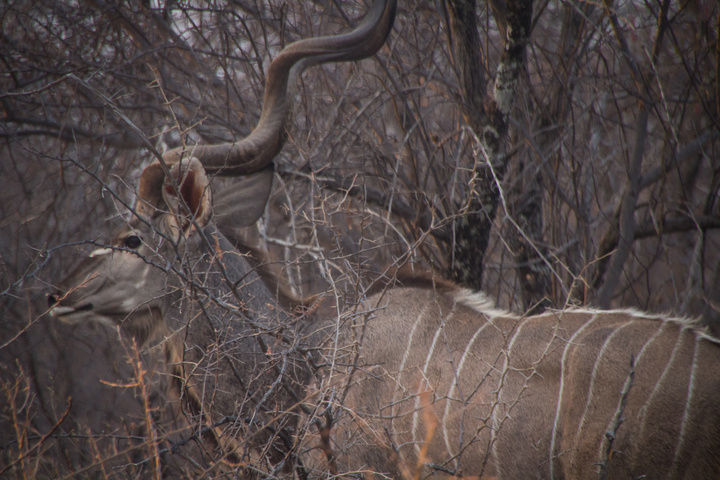 large animal etosha 720x480
