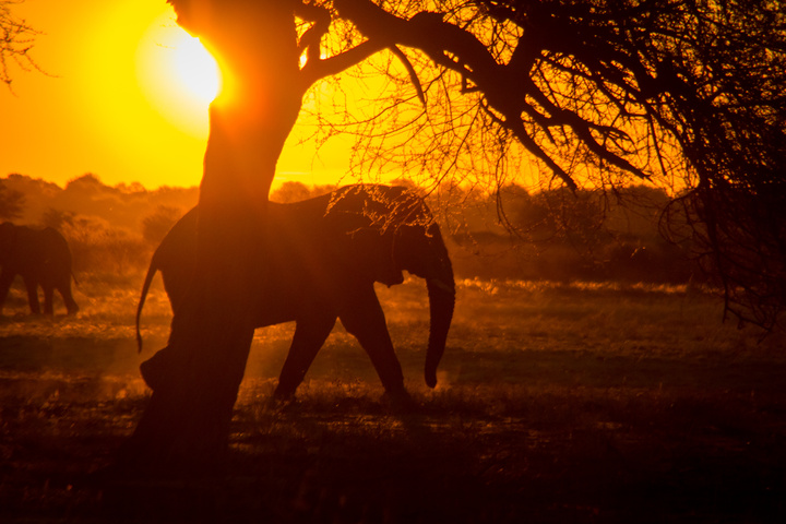 central kalahari elephant sunset 720x480