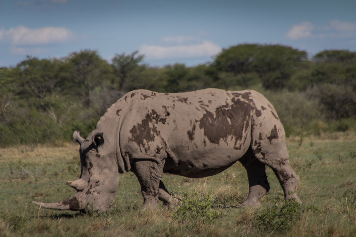 big rhino 720x480