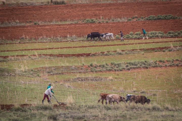 lesotho plowing field 720x480