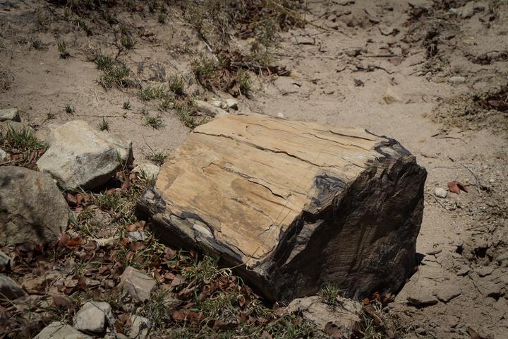 makgaba fossils botswana 720x480