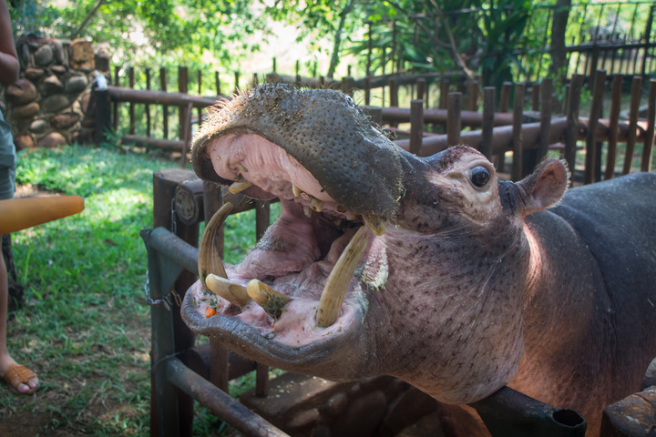 hungry hungry hippo 720x480