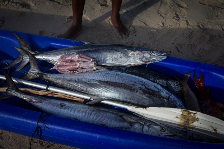 mozambique catch of the day 720x480