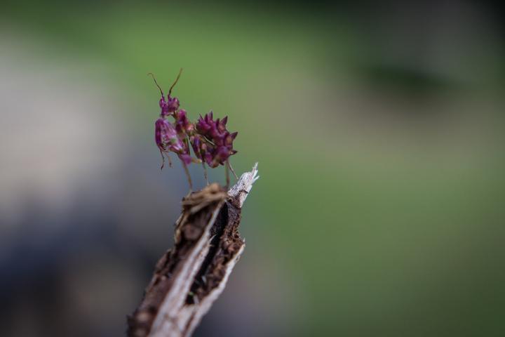zimbabwe cool insect 720x480