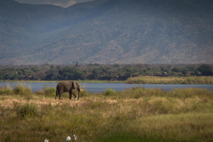 elephant zambezi banks 720x480