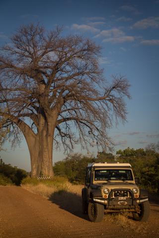 jeep boabab 320x480
