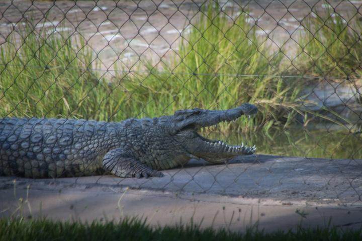 kariba croc farm 720x480
