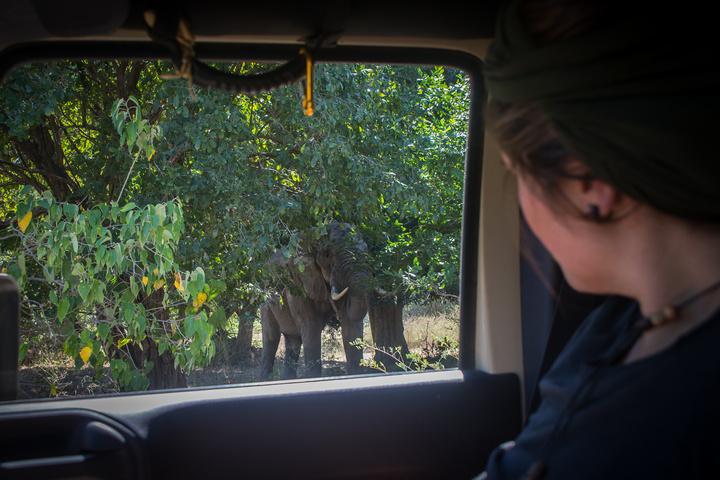 mana em elephant jeep window 720x480