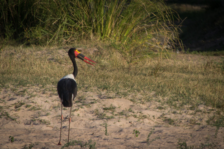 mana pools bird 720x480
