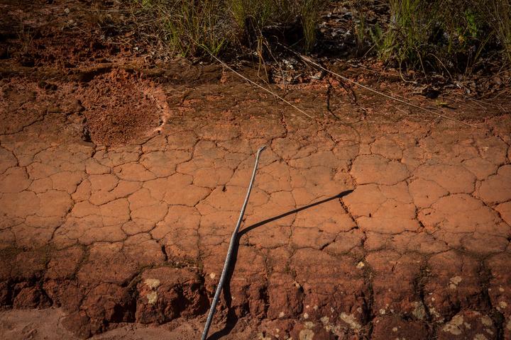 snake on road zambia 720x480