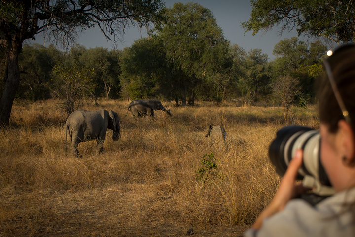 south luangwa emily photograph elephant 720x480