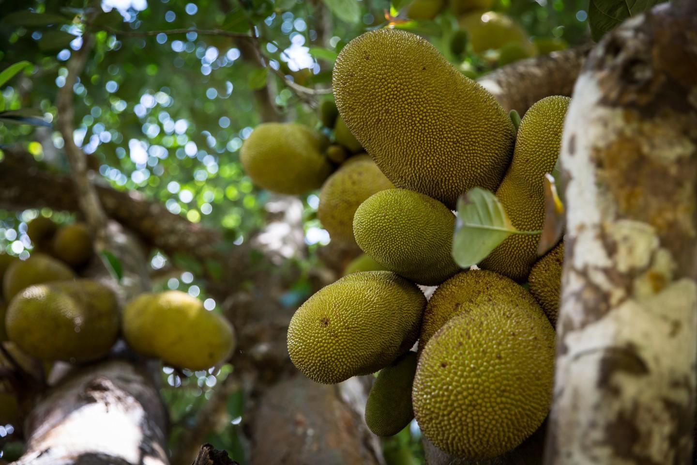 Tropical Fruit Tour Big Island