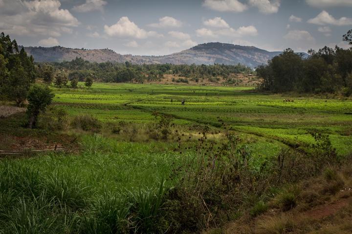 burundi farms 720x480