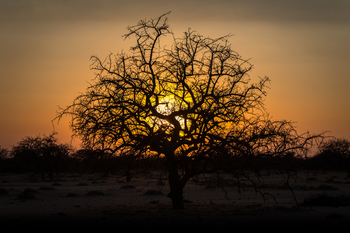 tanzania sunset tree 720x480