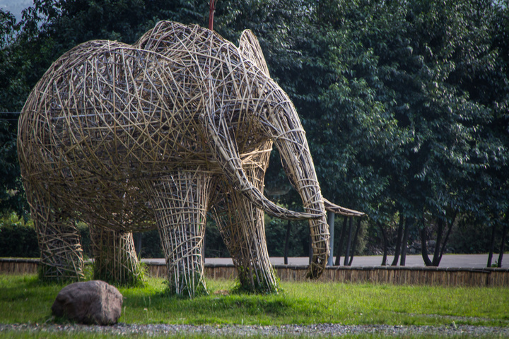 elephant weaving 720x480