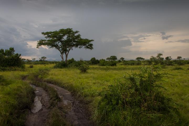 ishasha muddy roads and tree 720x480
