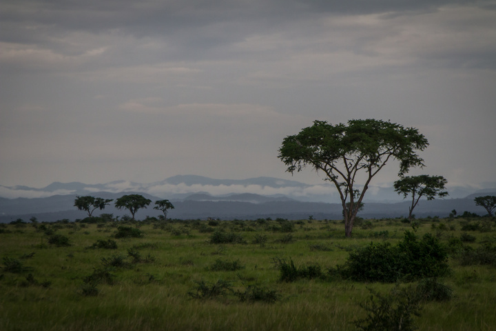 ishasha trees and drc mountains 720x480