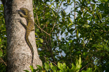 Lizard catching some sun