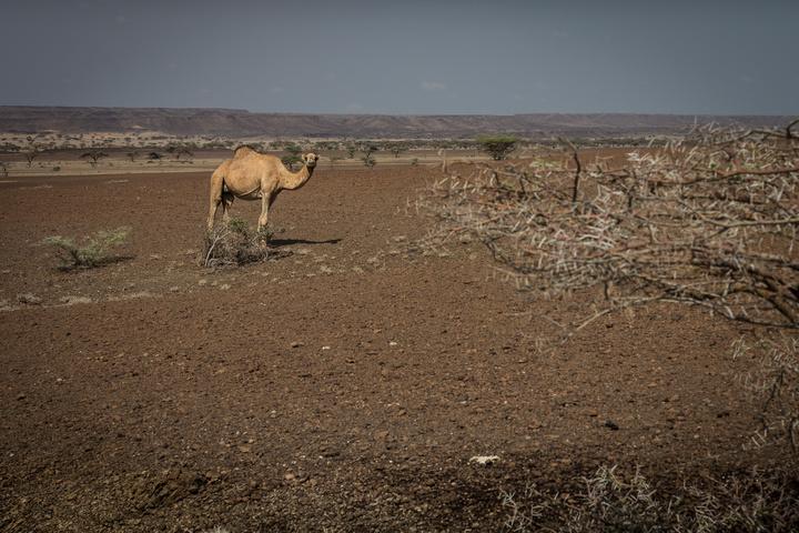 camel 720x480