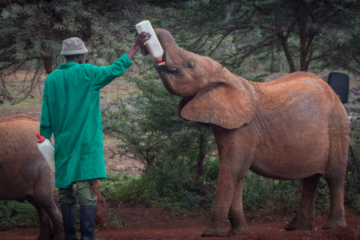elephant being fed 720x480