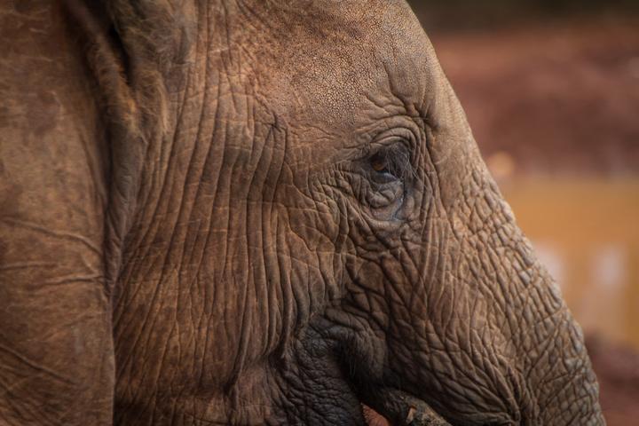 elephant face 720x480