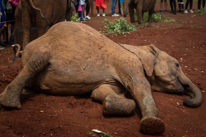 elephant resting 720x480