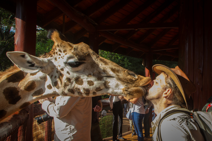 giraffe dan kiss2 720x480