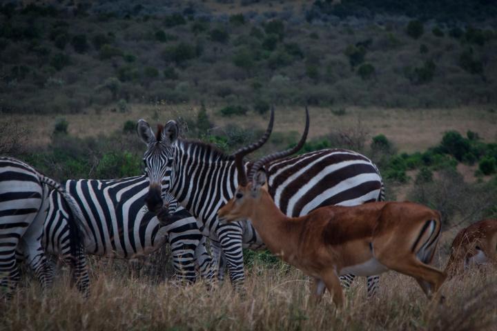 masai mara animals 720x480
