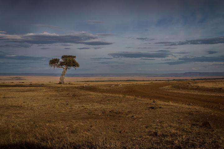 masai mara lone tree 720x480