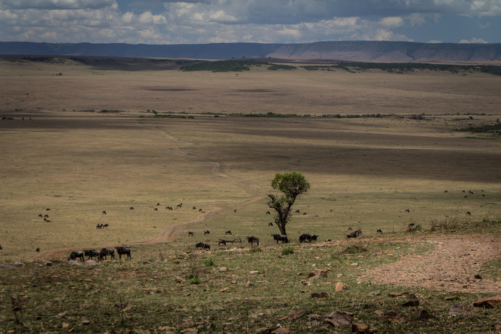 masai mara open plains 720x480