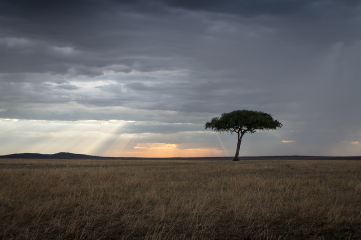 masai mara tree sunbeams 720x480