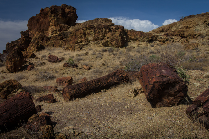 petrified trees 720x480